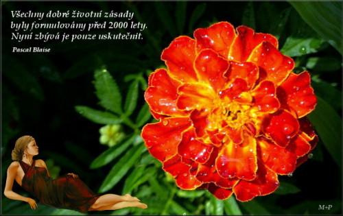 Citát Pascal Blaise