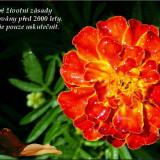 Citat-Pascal-Blaise