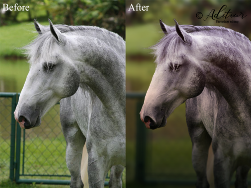 Horse-Edit-BeforeAfter.png