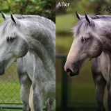 Horse-Edit-BeforeAfter