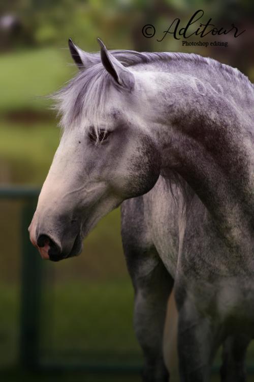 Horse-Edit.png
