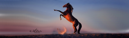 HorseDancing-EDIT.png