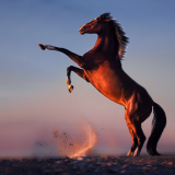 HorseDancing-EDIT