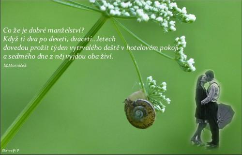 Citat--M-Hornicek.jpg