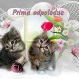 1b7edd8734_105087736_o2-1
