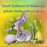 227a09385c_104035898_o2