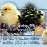 d4da0e5b1d_104099838_o2