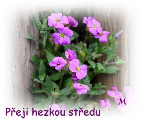 flower-3309875_960_720.jpg