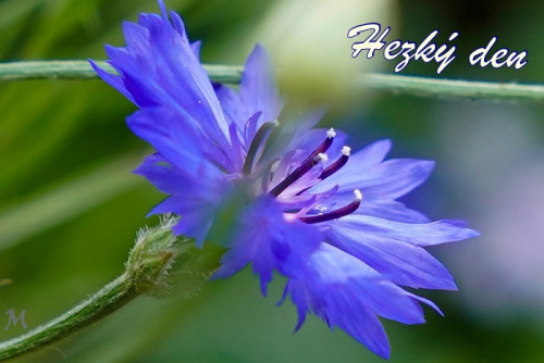flower 5483602 960 720