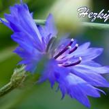 flower-5483602_960_720