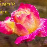 rose-4805611_960_720