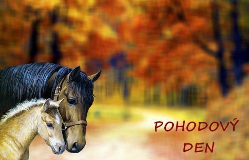 horse-3629555_960_720.jpg
