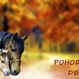horse-3629555_960_720