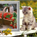Cat-3-Miminko58-cats