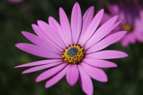 flower-5466416_960_720.jpg