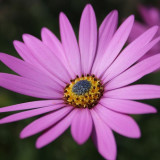 flower-5466416_960_720