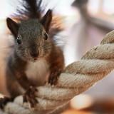 squirrel-5475240_960_720