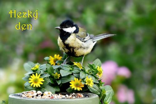 bird 5414224 960 720