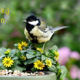 bird-5414224_960_720