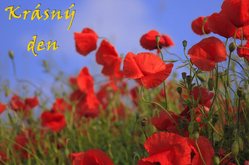 meadow-76358_960_720.jpg