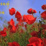 meadow-76358_960_720