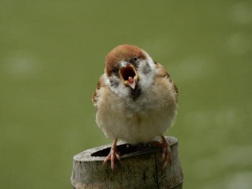 sparrow-4814858_960_720.jpg