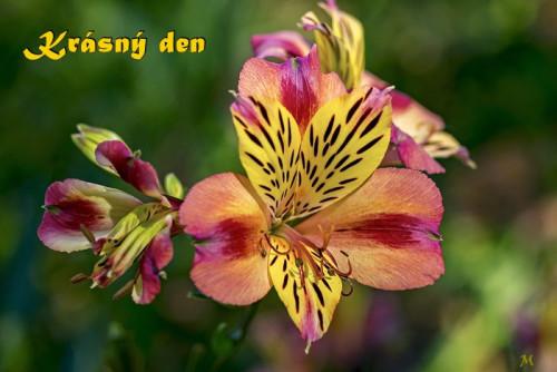 flower-5471204_960_720.jpg