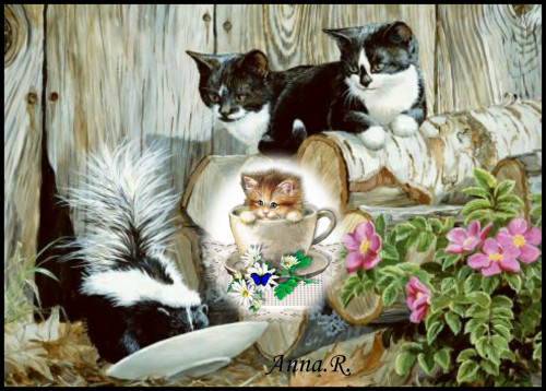 Cat-Miminko58-cats.jpg