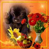 shiela---Good-Morning-1