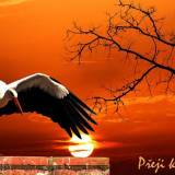 sunset-5278209_960_720