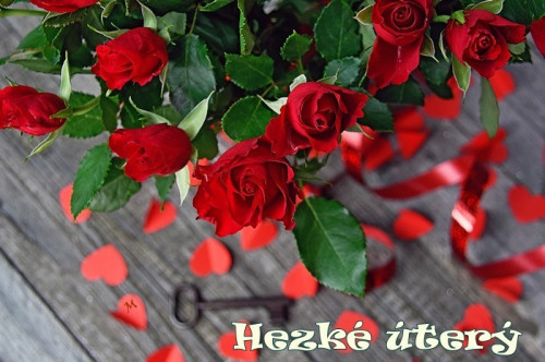 rose-3920673_960_720.jpg