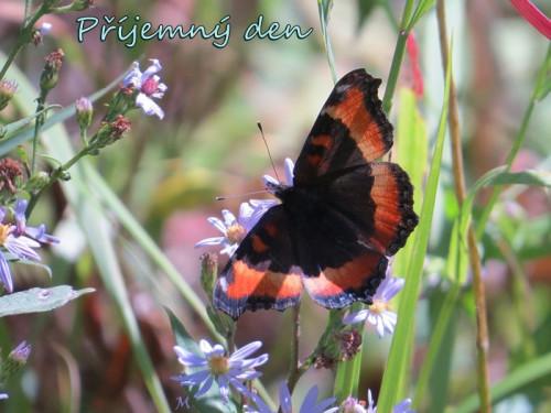 butterfly-5367968_960_720.jpg