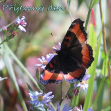 butterfly-5367968_960_720