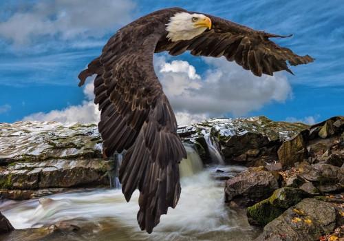 eagle-5556287_960_720.jpg