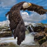 eagle-5556287_960_720