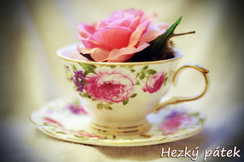 rose-cup-5298039_960_720.jpg