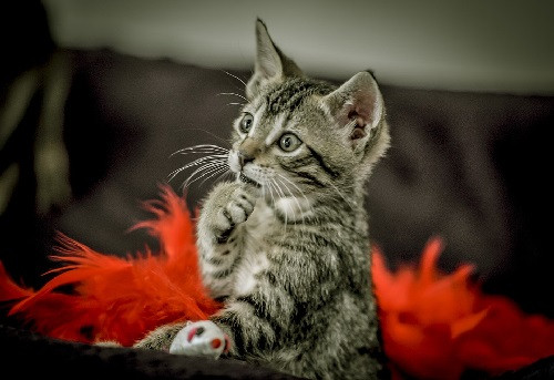 cat-4451003_960_720.jpg