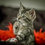 cat-4451003_960_720
