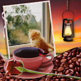 Coffee-Miminko58