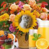 Good-afternoon-Miminko58-1
