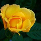 flower-3422894_960_720
