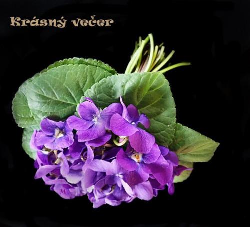 flowers-5472175_960_720.jpg