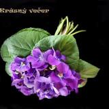 flowers-5472175_960_720