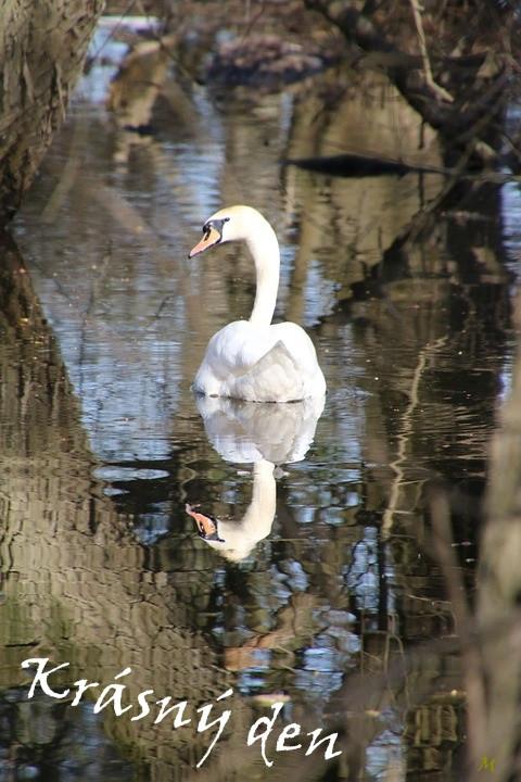 swan-5517138_960_720.jpg