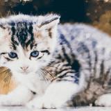 cat-5607299_960_720
