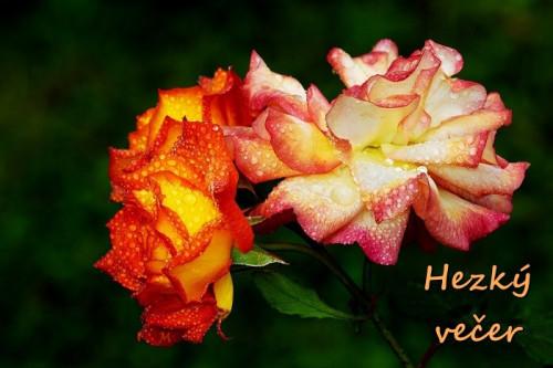 roses-3477383_960_720.jpg