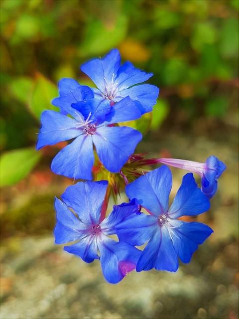 flowers-5584062_960_720.jpg