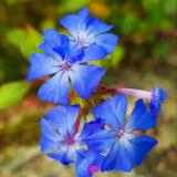flowers-5584062_960_720