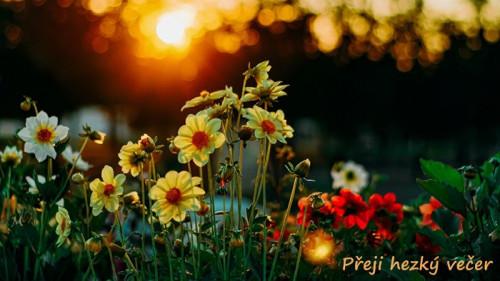 flowers-5585658_960_720.jpg