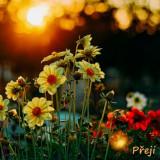flowers-5585658_960_720